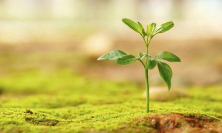 راههای افزایش امید در زندگی