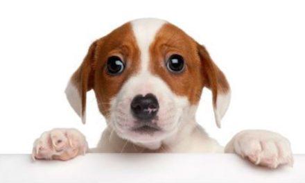 علت ترس از سگ(ساینو فوبیا) و ۴ راه مؤثر برای غلبه بر آن